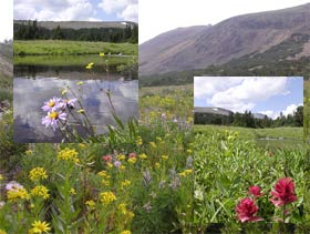 A collage of wildflower images.